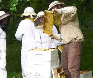 erdkinder beekeeping