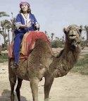 15 camel