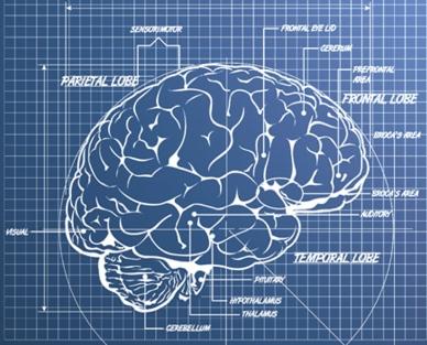 3-brain